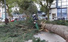 El fuerte viento derriba árboles y ramas, que caen sobre vehículos, calzadas y aceras