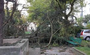 El fuerte viento provoca caídas de árboles y cristales sobre vehículos y ramas en la calzada impidiendo el tráfico