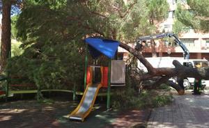 Un pino de 15 metros se desploma sobre el parque infantil de Regino