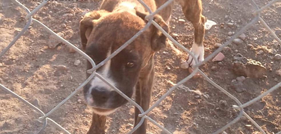 Nueva investigación contra el criadero de Melgar por maltrato animal y estafa