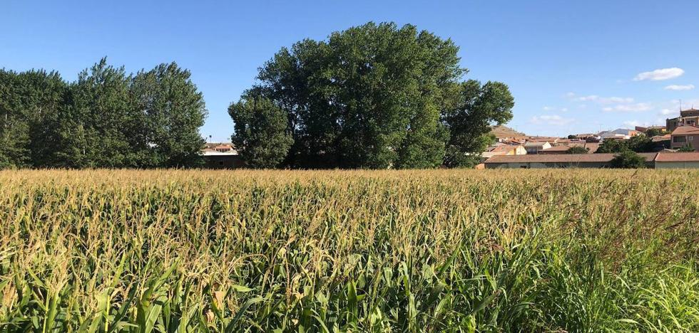 Las lluvias alegran el campo de Burgos ante la sementera tras un verano «muy irregular»