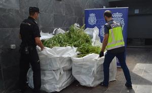 Descubren en Miranda una finca con más de 170 plantas de marihuana