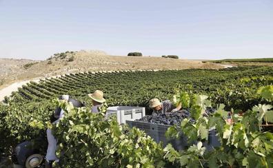 El arancel del 25% al vino que impondrá el 18 de octubre EE UU afectará a 650 bodegas de Castilla y León