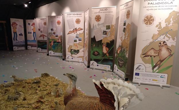 Ecofrikis presenta una exposición sobre el mundo de las aves hasta el 25 de octubre en la Fundación CajaCírculo