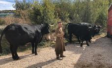 La Cabaña Real de Carreteros participa en la grabación de la serie 'El Cid'