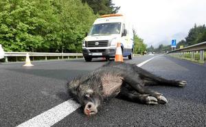 La fauna salvaje provoca 4.152 hectáreas de daños en Valladolid