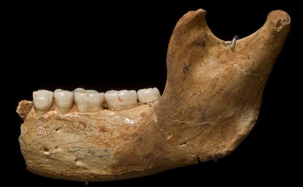 Un nuevo estudio indica que el Homo Antecessor de Atapuerca podría ser el ancestro común de neandertales, sapiens y denisovanos