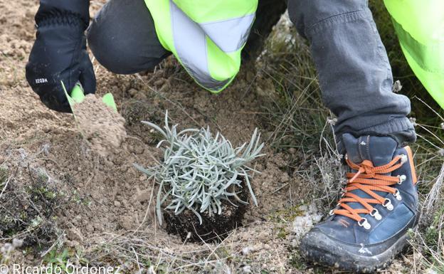 Imagen de una plantación de árboles. /RICARDO ORDÓÑEZ / ICAL